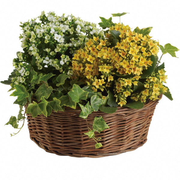 (display image: Basket of Joy)