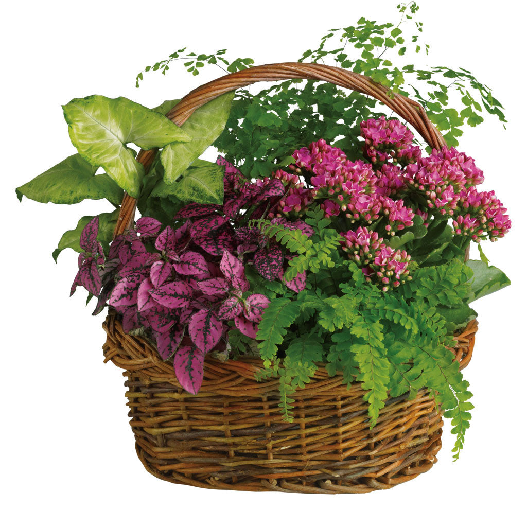(display image: Secret Garden Basket)