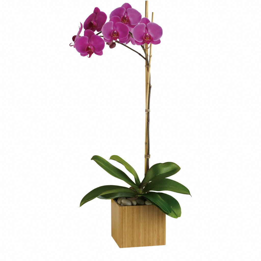 (display image: Teleflora's Imperial Purple Orchid)