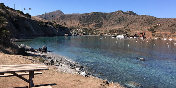 Catalina Wild Buffalo Relay - Race Preview