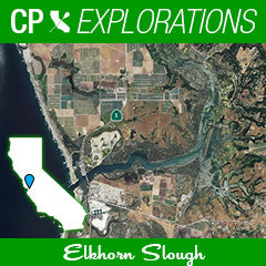 Cali Paddler Explorations Elkhorn Slough
