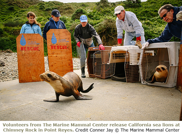 Marine Mammal Center 5% Paddle Pledge