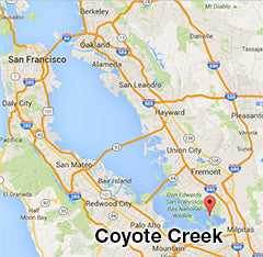 Coyote Creek Tide