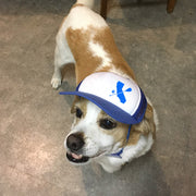 PupLid Dog Paddle Hat