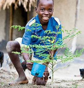 Moringa Trees for a Family