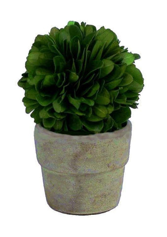 Mills Floral Preserved Boxwood 4-inch Mini Ball on Pot Set Kendall and Everett