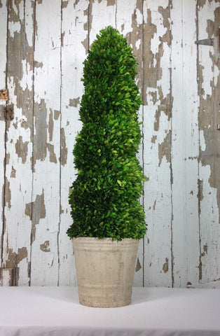 Mills Floral Preserved Boxwood 43-inch Spiral Topiary Kendall and Everett