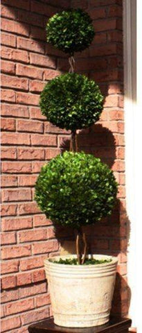 Mills Floral Preserved Boxwood 59-inch Triple Ball Topiary