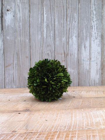 Mills Floral Preserved Boxwood 6-inch Ball