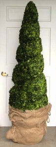 Mills Floral Preserved Boxwood 75-inch Spiral Topiary Kendall and Everett