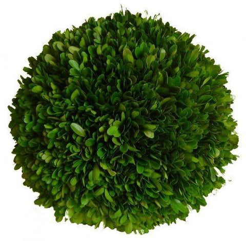 Mills Floral Preserved Boxwood 8-inch Ball Kendall and Everett