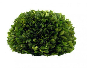 Mills Floral Preserved Boxwood 8-inch Half Ball Set Kendall and Everett