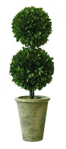 Mills Floral Small Preserved Boxwood 20-inch Double Ball Topiary Kendall and Everett