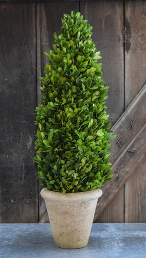 Mills Floral Large 24-inch Preserved Boxwood Cone Topiary