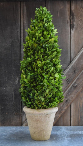 Image of Mills Floral Large 24-inch Preserved Boxwood Cone Topiary