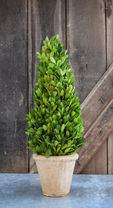 Mills Floral Small 16-inch Preserved Boxwood Cone Topiary