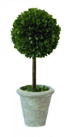 Mills Floral Large Preserved Boxwood Ball on Stem Topiary Set The Garden Gates