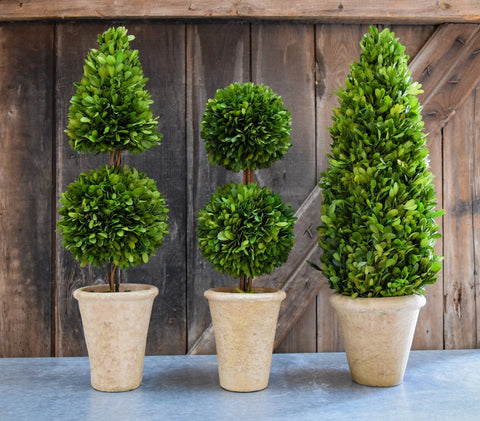 Mills Floral Small Preserved Boxwood 24-inch Cone and Ball Topiary