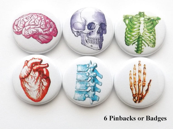 Colorful Anatomy PINBACK BUTTON pins brain anatomical heart skull med student gift graduation - Art Altered  - 1