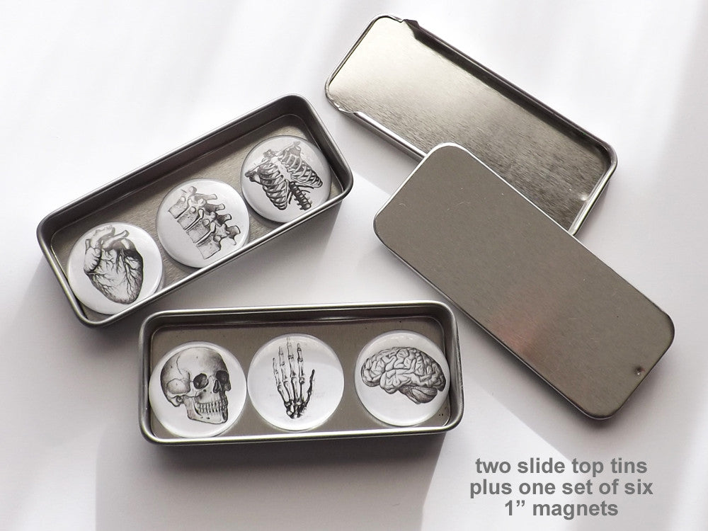 "Anatomy Gifts 2 tins + 1 set of six 1"" magnets or pins stocking stuffer skull brain anatomical heart-Art Altered"