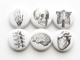 "Anatomy Gift Set 2 tins + six 1"" magnets stocking stuffer skull brain anatomical heart-Art Altered"