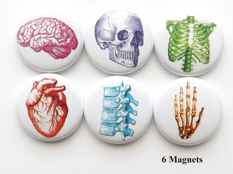 Colorful Anatomy MAGNETS skull anatomical heart medical science skeleton biology - Art Altered  - 1