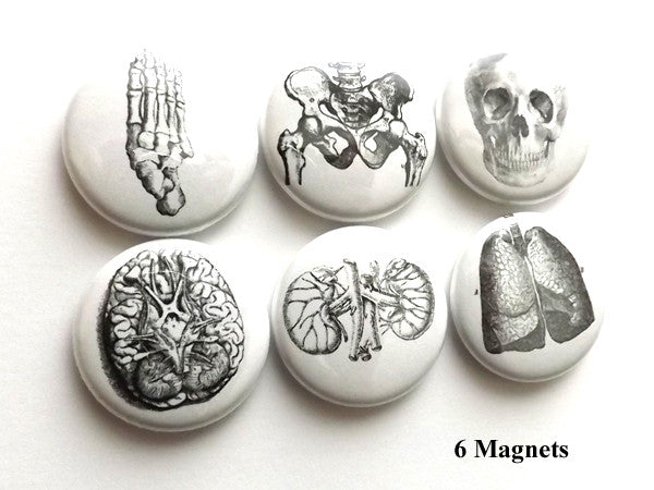 Human Body MAGNETS anatomy medical science skull brain anatomical - Art Altered  - 1