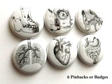 Human Anatomy PINBACK BUTTONS pins badges anatomical heart medical body - Art Altered  - 1