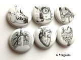 Human Anatomy MAGNETS body medical science anatomical heart-Art Altered