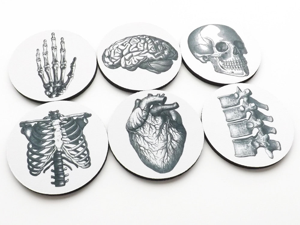 Anatomical Theme Coasters neoprene human body medical gift skeleton skull brain anatomy doctor nurse-Art Altered