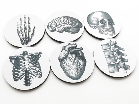 Anatomical Theme Coasters neoprene human body medical gift skeleton skull brain anatomy doctor nurse