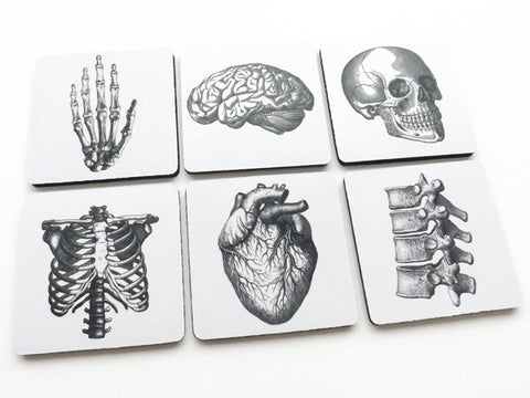 "Anatomy COASTERS 3.5"" neoprene human body medical skeleton skull anatomical heart - Art Altered  - 1"