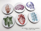 Colorful Anatomy Gift Coasters nurse practitioner physician assistant doctor human body medical skull brain anatomical heart