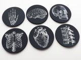 Anatomy Coaster future doctor male nurse medical student physician assistant gift stocking stuffer black white goth home decor gothic school-Art Altered