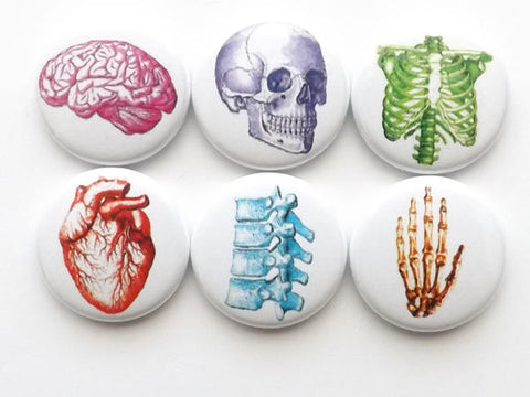 Stocking Stuffer button pin anatomy medical school gift badge spine fathers day party favor anatomical heart skull student magnet graduation-Art Altered