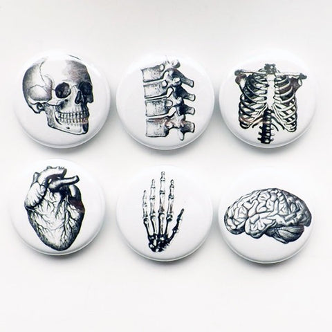Human Anatomy teacher gift Magnets brain skull anatomical heart vertebrae body geekery pins stocking stuffer brain party favors medical goth-Art Altered