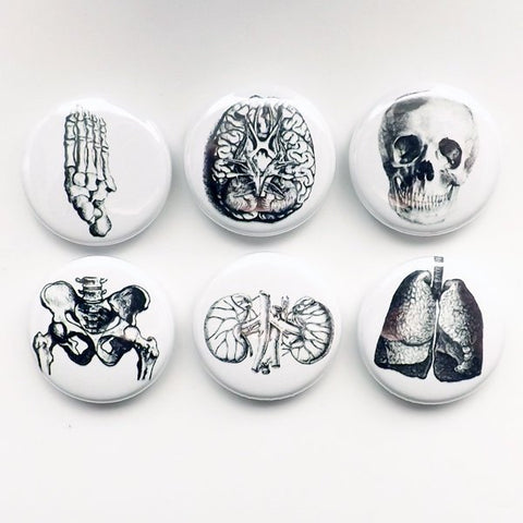 Human Body Anatomy Magnets physician assistant doctor gift skull foot graduation geek button pins kidney lungs party favor greys goth-Art Altered