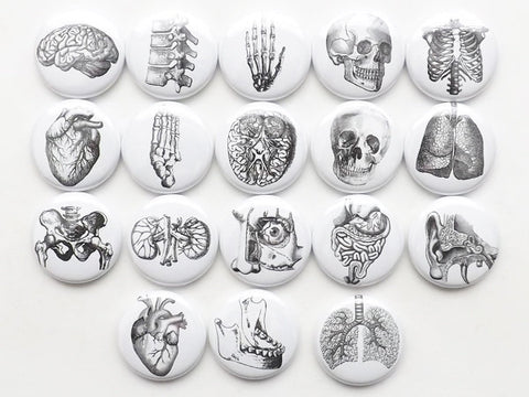 Anatomy Magnets set of 18 gift set white coat ceremony medical school graduation doctor nurse physician assistant surgeon student goth decor-Art Altered