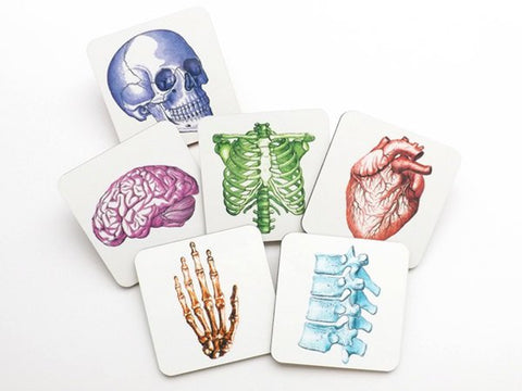 Anatomy Hardboard Drink Coasters Set graduation gift anatomical heart brain medical student party favor stocking stuffer teacher goth skull-Art Altered