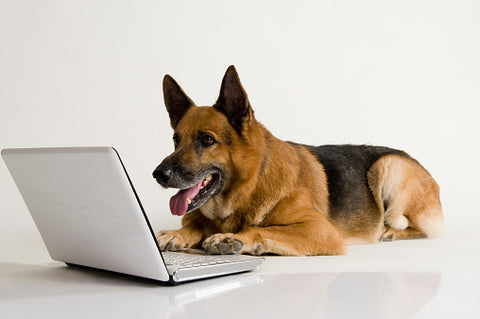Dog uses laptop