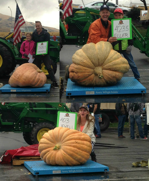TestOut Pumpkin Weigh In