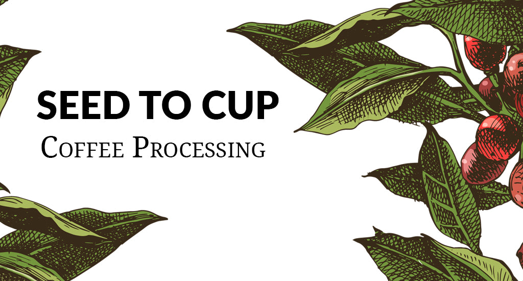 Seed to Cup: Coffee Processing Methods