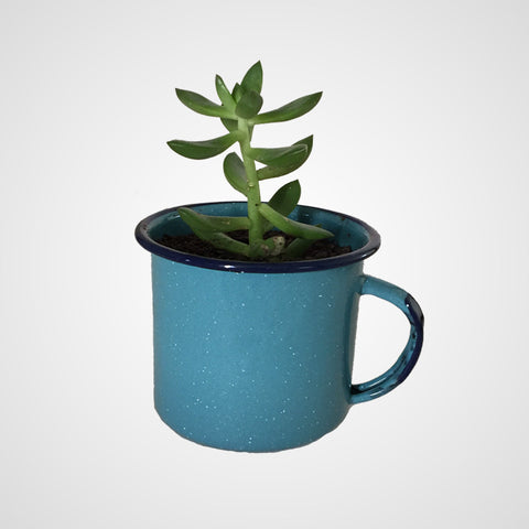 Succulent Mug Pot Decor Vintage Enamel