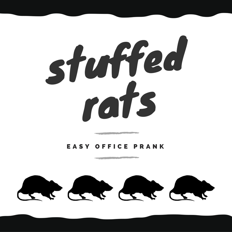 Funny & Easy Stuffed Rat Office Prank