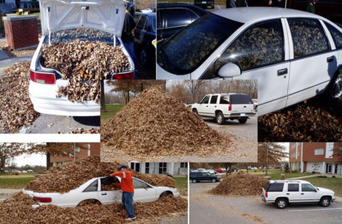 fall-prank-car-buired-in-leaves-funny