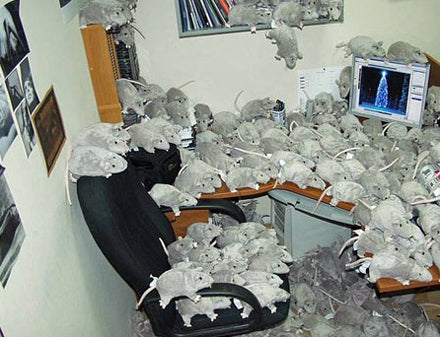 funny-scare-rats-prank-in-office-by-colleagues