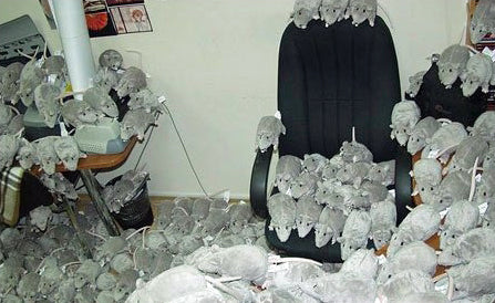 funny-work-desk-prank-stuffed-rats-joke