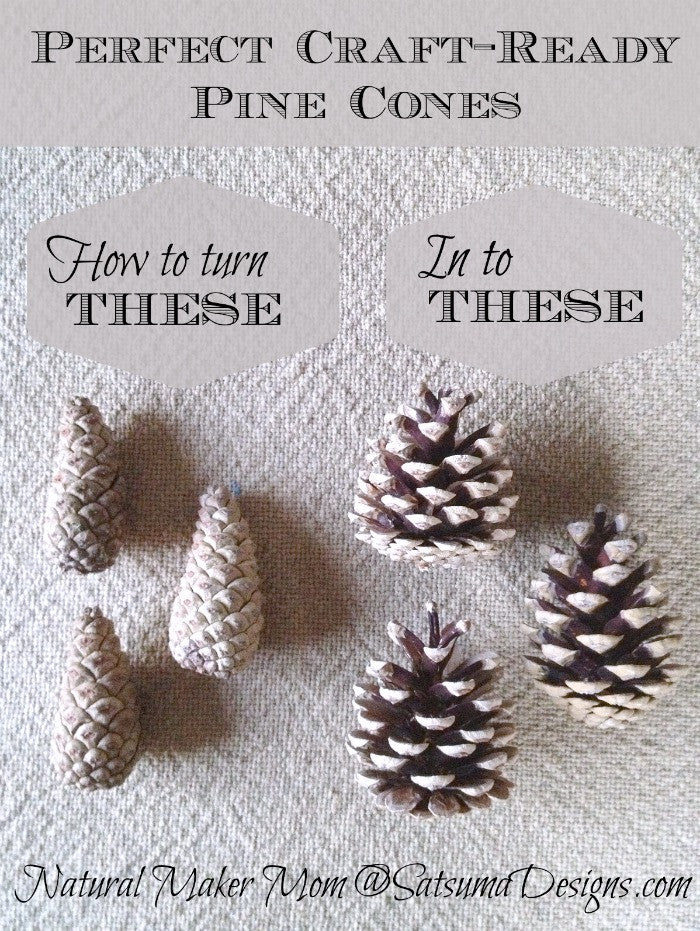 Free Craft Pine Cones in One Step