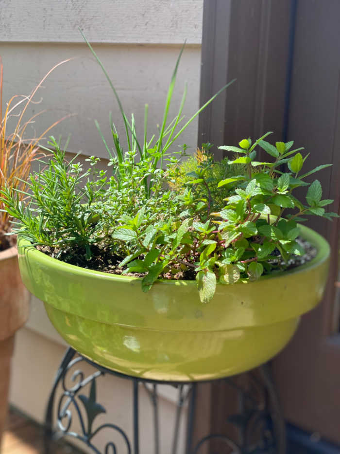 Shallow planting pot with garden herbs
