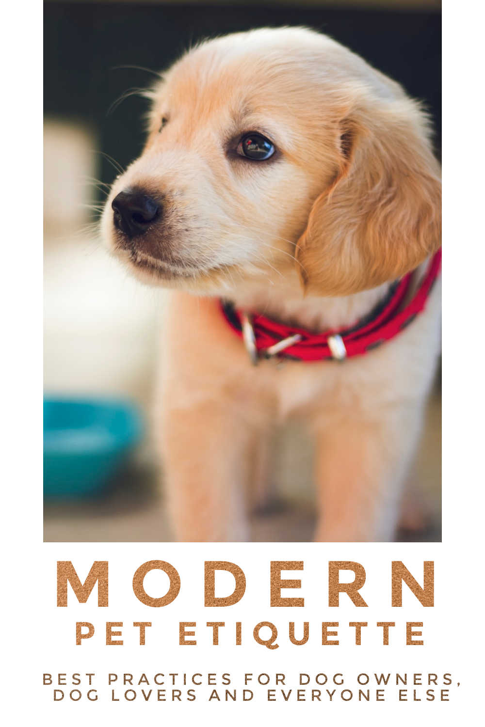 Yellow laborador puppy with red collar and text at the bottom of the image saying Modern Pet Etiquette